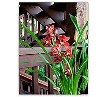 Brick Red With Wood Photographic Print