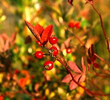 Autumn Berries by Susan See