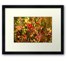 Autumn Berries Framed Print