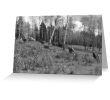 Horse Herd Running in Wooded Pasture on BC Ranch Greeting Card