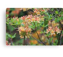 Growing In The Woods Canvas Print