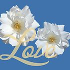 Beautiful white rose flowers in navy blue background. Floral photo art. Love and romance. by naturematters