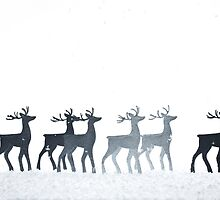 Christmas Reindeer by Andrew Bret Wallis