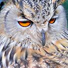 Long Eared Owl by itchingink