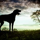 German Wirehaired Pointer Dog by heidiannemorris