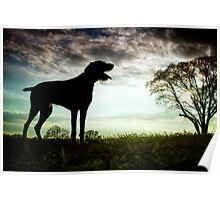 German Wirehaired Pointer Dog Poster