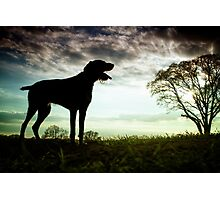 German Wirehaired Pointer Dog Photographic Print