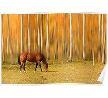 Mystic Autumn Grazing Horse Poster