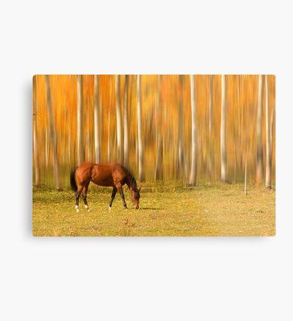 Mystic Autumn Grazing Horse Metal Print