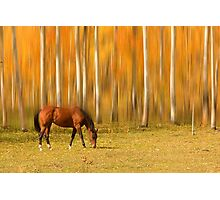 Mystic Autumn Grazing Horse Photographic Print