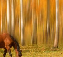 Mystic Autumn Grazing Horse Sticker