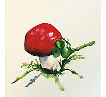 Mushroom Photographic Print