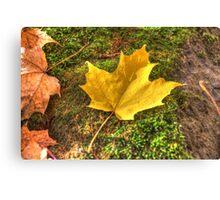 Fallen leaves IV Canvas Print