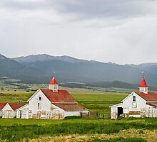 Colorado Farm by Peter Sucy