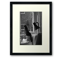 Cats. Watching & Waiting. It's what we do. Framed Print