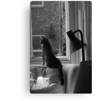 Cats. Watching & Waiting. It's what we do. Canvas Print