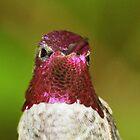 Hummingbird Head Tucker NP California by loiteke