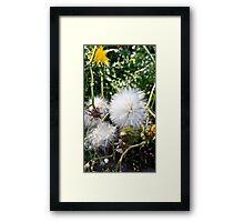Fluff Framed Print