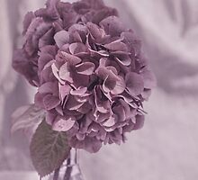 Lilac Delight by Amar-Images