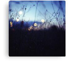 Long wild grass on summer evening twilight dusk blue bokeh square Hasselblad medium format film analog photo Canvas Print