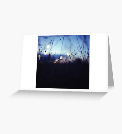Long wild grass on summer evening twilight dusk blue bokeh square Hasselblad medium format film analog photo Greeting Card