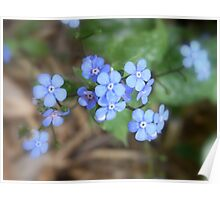 not forget-me-not Poster
