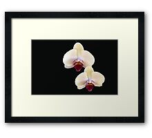 Two of a Kind - orchid flower Framed Print