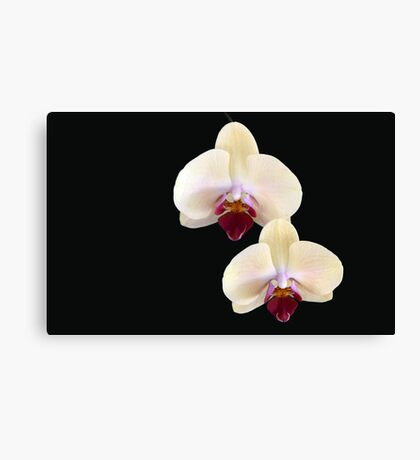 Two of a Kind - orchid flower Canvas Print