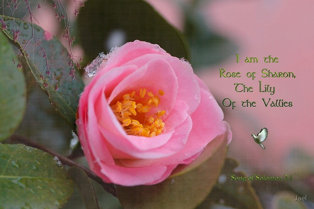 THE ROSE OF SHARON by Jael