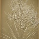 Cabbage Tree Flower by Elaine Teague
