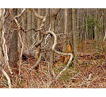 The Lure of the Thicket Photographic Print
