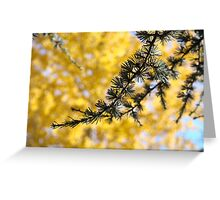 Yellow Fall Tree Leaves Landscape Pine Tree Greeting Card