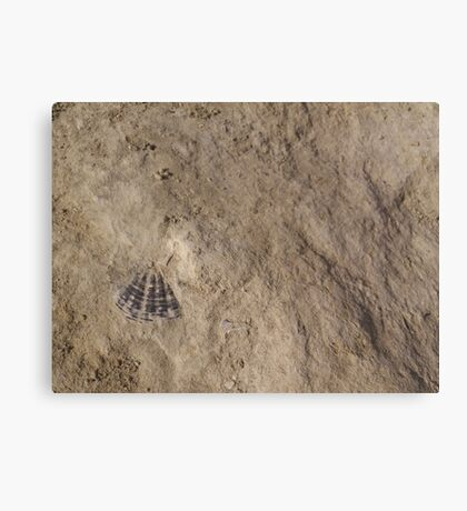 Devona sp. Fossil Canvas Print