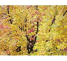 Autumn Forest Art prints Yellow Fall Leaves Photographic Print