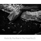 Rocks By The River In The Forest - no.2 by Solomon Walker