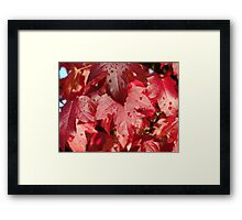 RED Autumn Leaves Art Prints Fall Trees Framed Print