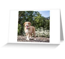Bailey...Blonde Border Collie... Greeting Card