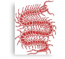 Centipede Adventure Canvas Print