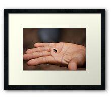 Cuba: The tiny, tiny Monte Iberia eleuth frog Framed Print