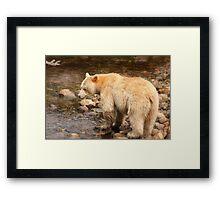 Spirit salmon memories Framed Print