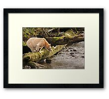 Spirit intent on fishing Framed Print