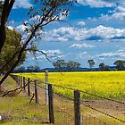 Canola Field by Leonie Morris