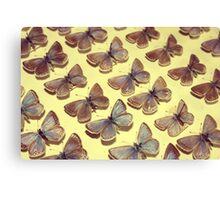 The Butterfly Collection 2 Canvas Print