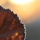 """ Ice Crystal Dawn "" by Richard Couchman"