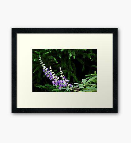 Butterfly Bush Look-Alike Framed Print