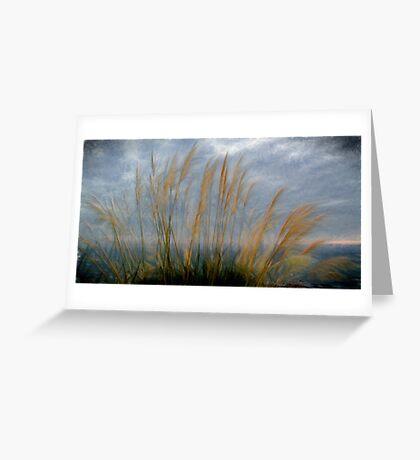 Pampas grass,Cornwall UK. Greeting Card