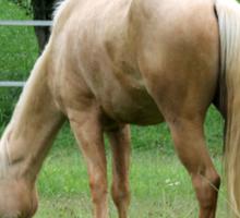 horses Sticker