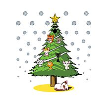 Christmas Cats Tree Decoration Holiday Gift T-Shirt Photographic Print