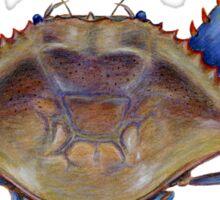 Blue Crab (Callinectus sapidus) Sticker