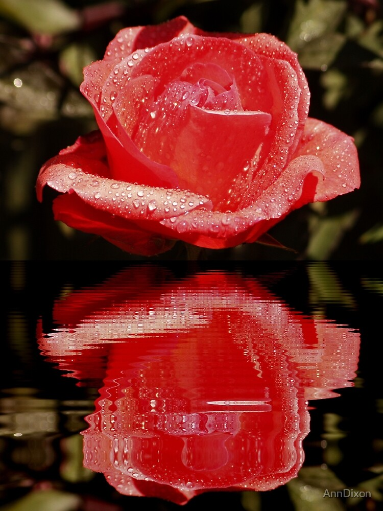 Roses are Red !!! by AnnDixon